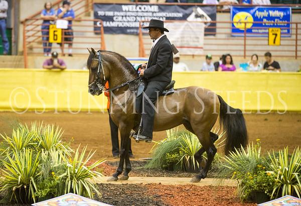 Fino Stallions 7 & over