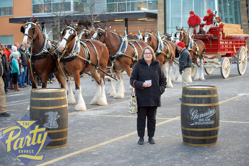 Clydesdale Portraits 295.jpg
