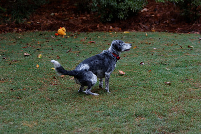 Canine Mastermind
