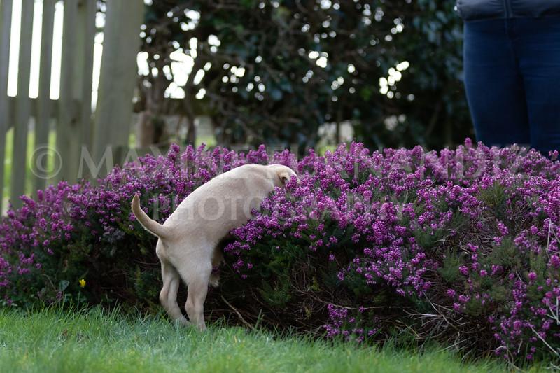 Weika Puppies 24 March 2019-6361.jpg