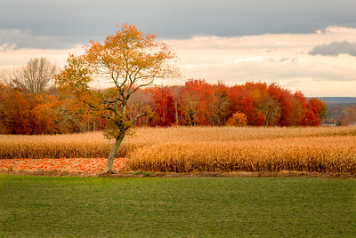 Autumn at Buttonwood Farm