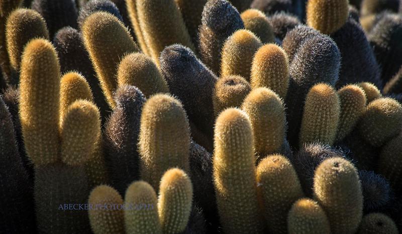 Lava cactus.jpg