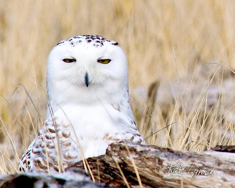 Owl-8x10-7549.jpg