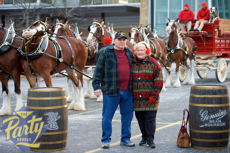 Clydesdale Portraits 75.jpg