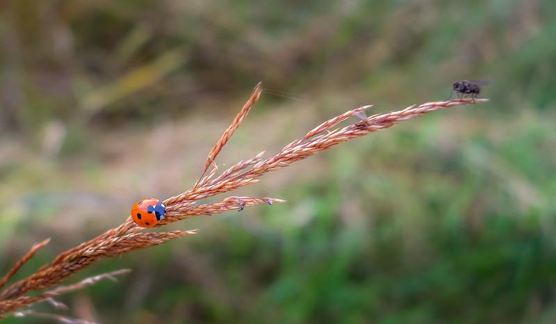 Bugs and Beetles - 54.jpg