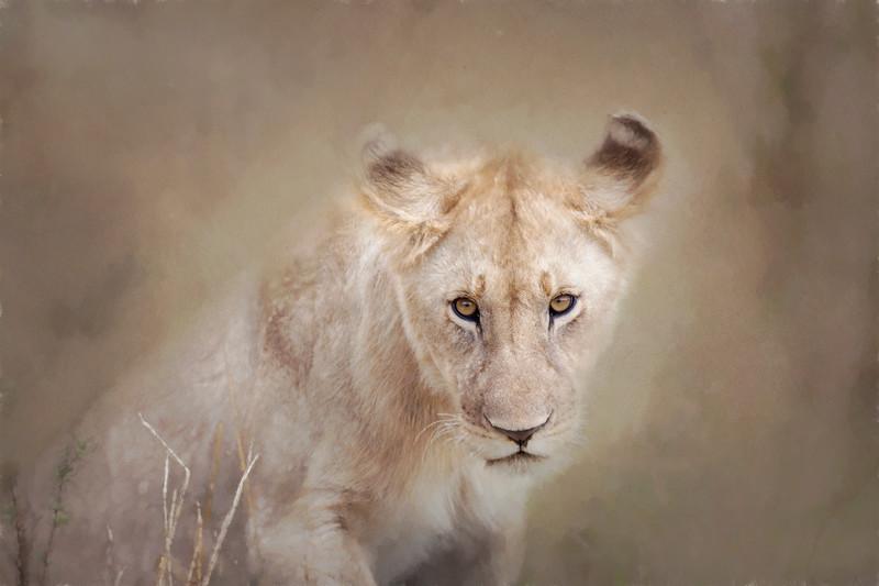 Lion _MG_9229c.jpg