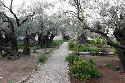 Garden of Gethsemane, Jerusalem 3-12-16