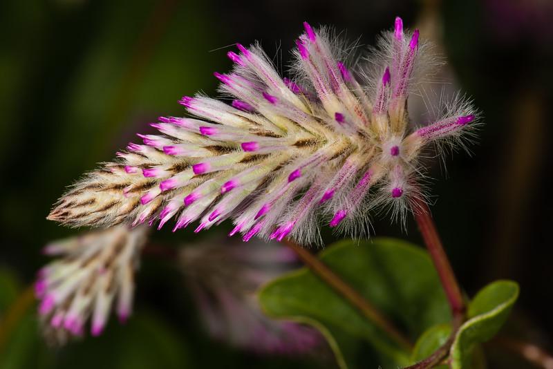 Flowers Boothbay-1.jpg