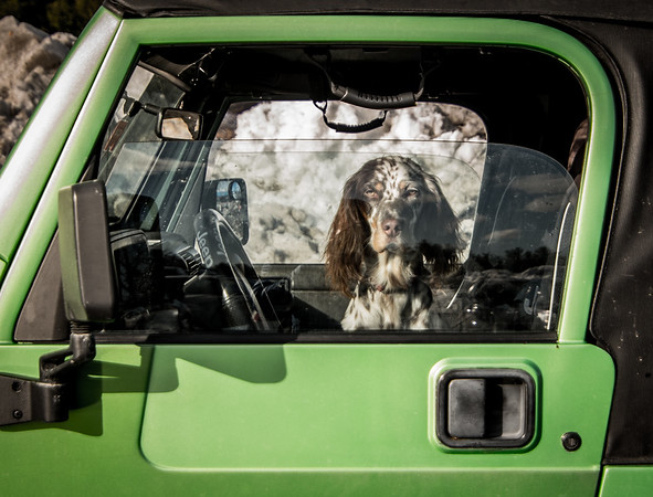 Dog in Jeep