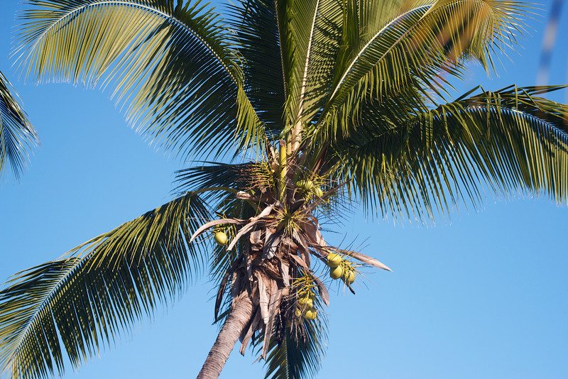 Roewe_Fiji 34.jpg