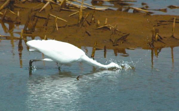 Nisqually Wildlife Preserve April 2012