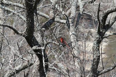 2013 Wildlife at Table Rock Lake