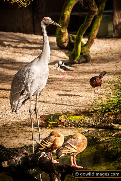 Avian Guard
