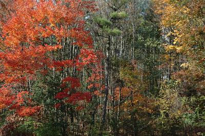 October 07 Fall Mountain Pumpkin Festival
