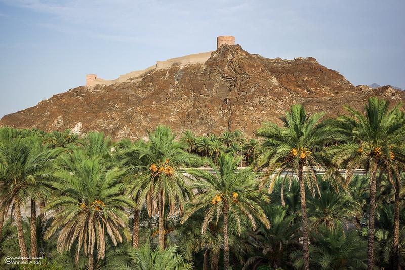 palm tree (12).jpg