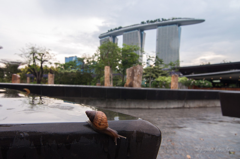 Snail and Marina Bay Sands