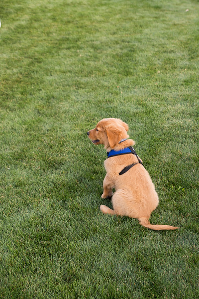 DogDays_Dogs_Gardens_2015_IMG_5505.jpg