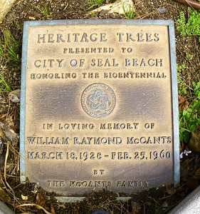 Seal Beach Heritage Trees