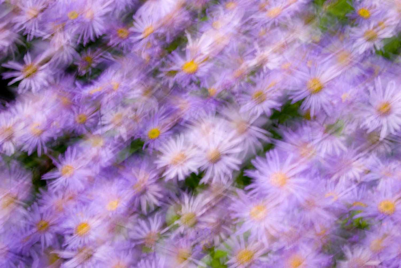 shaky daisies.jpg