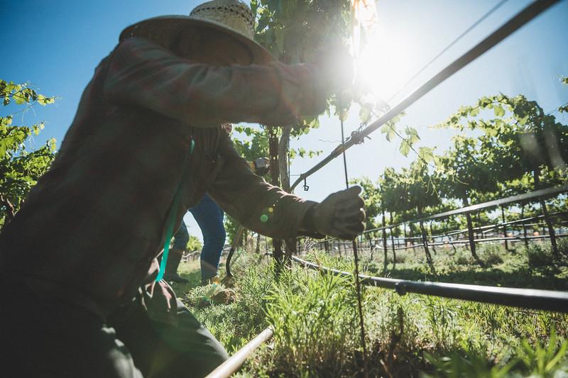 Mesilla Valley Estates Vineyard