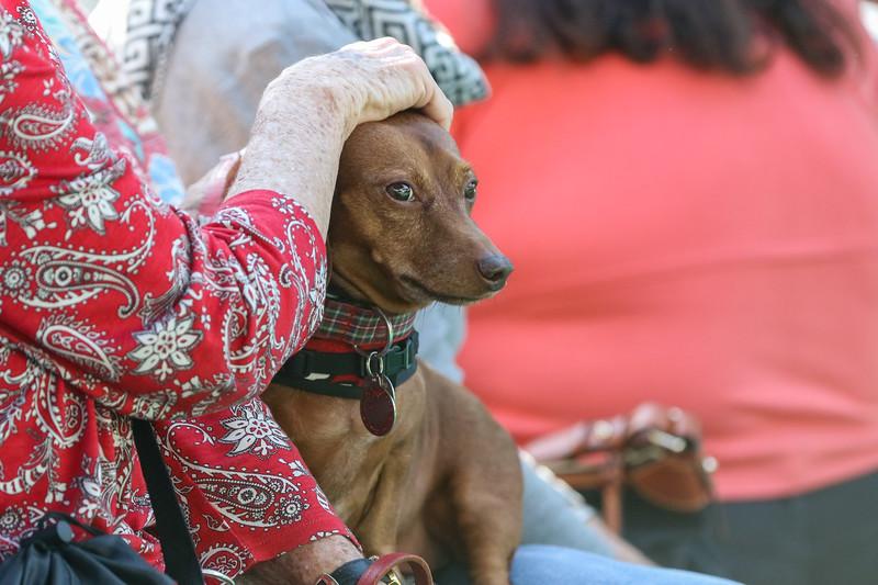 Winter Wonderland Dog Race Classic at The OldWorld German Restaurant