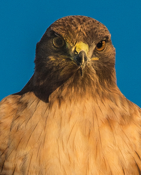 Falcon-120920151201.jpg