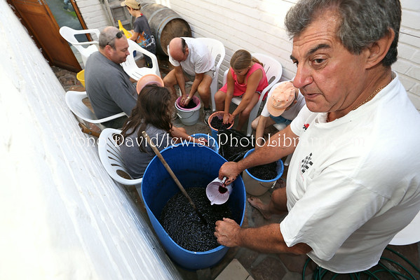 SOUTH AFRICA, Western Cape, Cape Town, Claremont. Passover (Pesach) winemaking (3.2013)