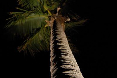 Cayman 2007