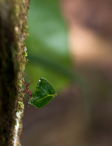 Amazon_Insects 07.jpg