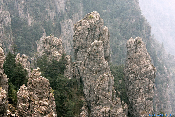Shennongu