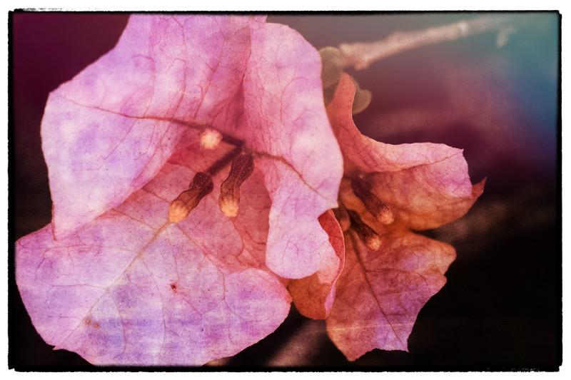 February 25 - Flower-1.jpg