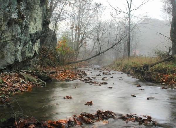 Goose Creek View