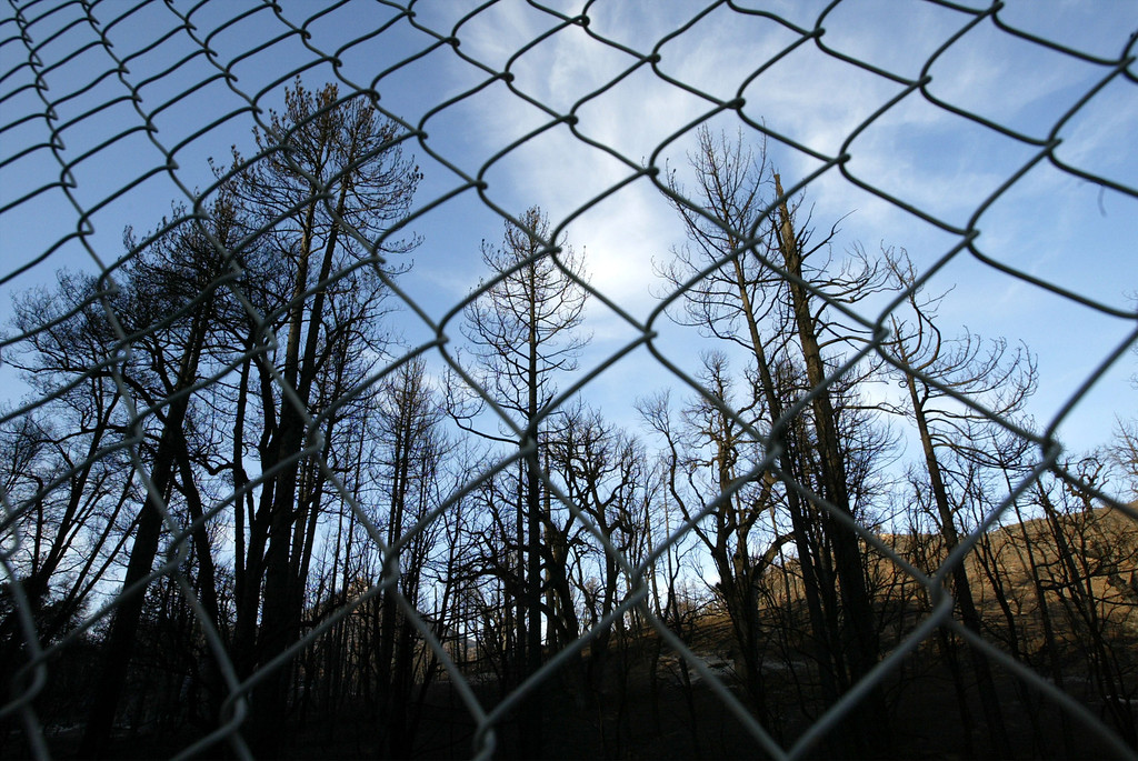 . CUYAMACA RANCHO STATE PARK, CA, NOVEMBER 5:  Burned trees stand behind a fence intended to keep cars from pulling to the side of the road in Cuyamaca Rancho State Park, which has been closed and may not open until next spring or beyond, November 5, 2003 in eastern San Diego County. The popular 26.000-acre mountain preserve park burned in the biggest fire in state history, the 280,000-acre Cedar Fire that killed at least 14 people and destroyed thousands of homes. The fire was contained, or surrounded by firelines, yesterday.     (Photo by David McNew/Getty Images)