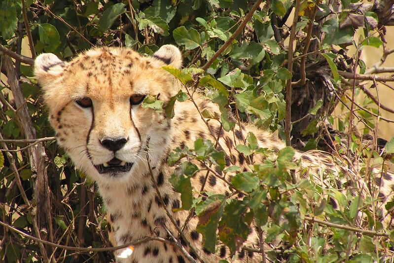 PICT1146_Masai Mara_upr1b.jpg