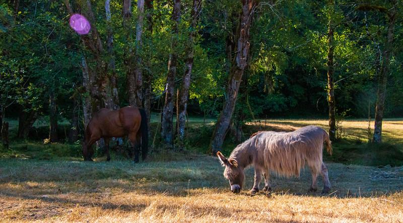 Leaping Lamb Farm-7819.jpg