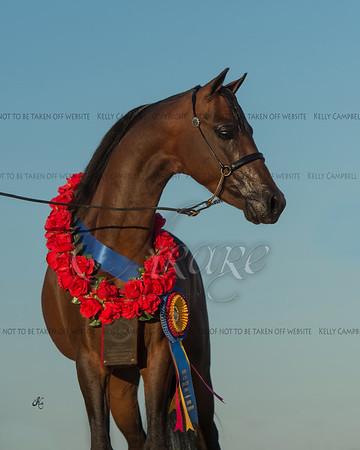 Erika's stallion