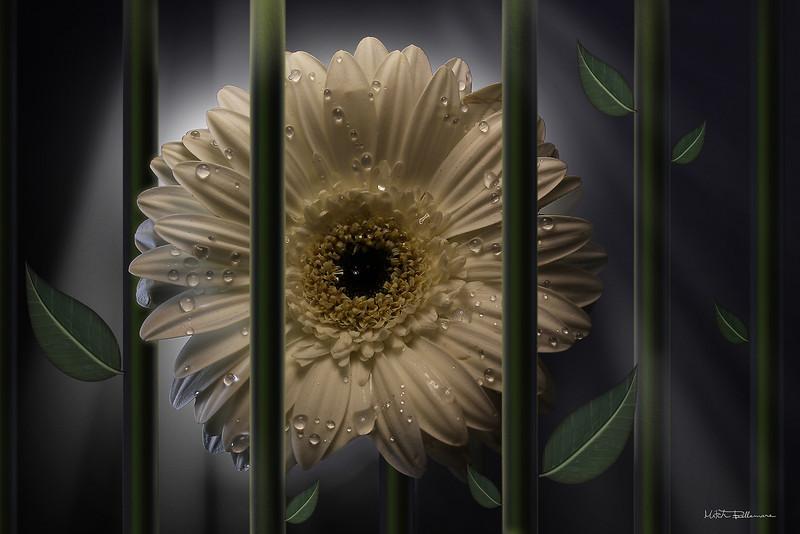 flowerprison.jpg