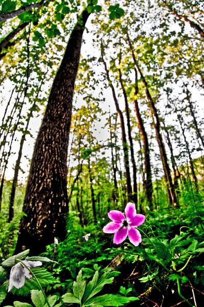 Utstlillinger