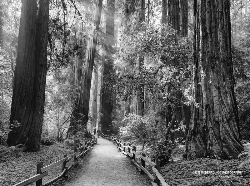 Muir Woods-7171-Edit.jpg