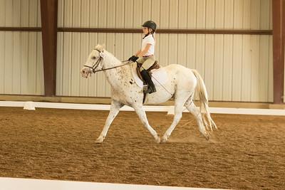 Horse 563
