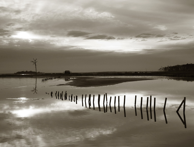 Distant tree, water fence .jpg