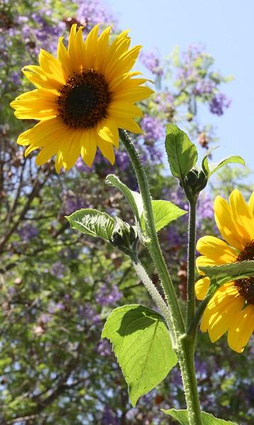 Summers Past 12.jpg