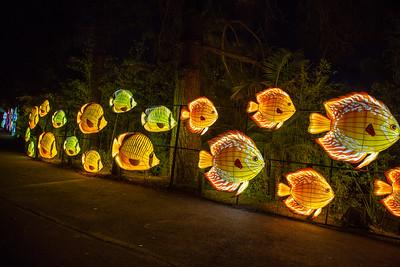 Glowfari