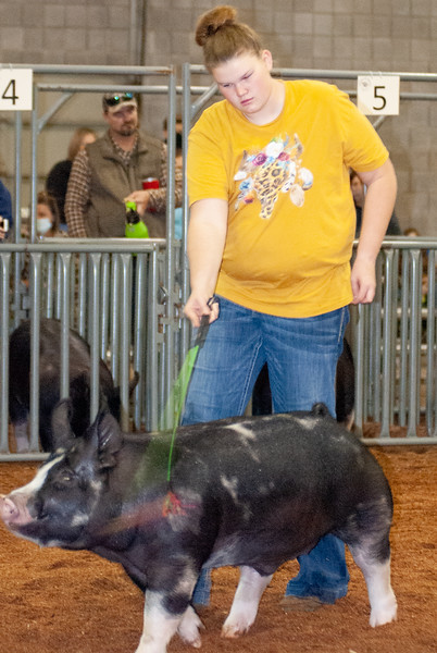 American Royal Barrow Show