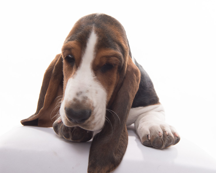 Taylor dogs and puppies too!-9525.jpg