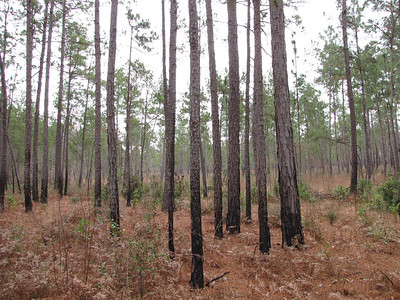 Big Thicket January 2011