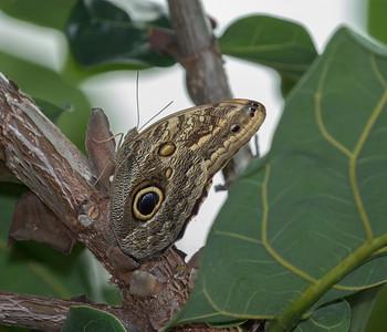 Powell Gardens Butterfly Festival--August 8 2019