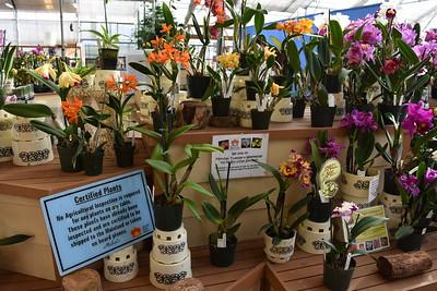 Akatsuka Orchid Gardens - Big Island, Hawaii