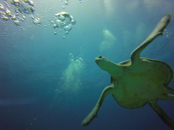 Cancun-Diving