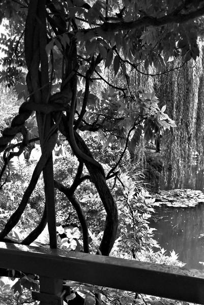 Monet's Garden Lake~0137-2.
